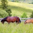 mother and chlid grazing — Stock Photo