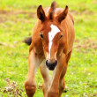 Running horse — Stock Photo #2390498