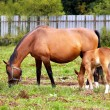 Mother and child grazing — Stock Photo #2390663