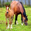 Mother & child grazing — Stock Photo #2390694