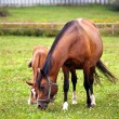 Mother & child grazing — Stock Photo #2390734