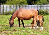 Mother and child grazing — Stock Photo