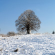 Lone tree in the winter - Stock Photo
