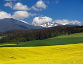 Yellow meadow and mountain — Stock Photo