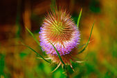 Bright Colorful Flower — Stock Photo