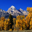 Stock Photo: Panorama: Grand Teton with autumn