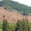Clear cut logging slope — Stock Photo