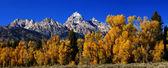Panorama: Grand Teton with autumn — Stock Photo
