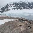 Gentoo penguin rookery with cruise ship — Stock Photo
