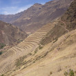 Terraced Inca fields — Stock Photo