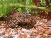 Glance from aquarium — Stock Photo
