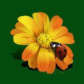 Ladybird on flower — Stock Vector