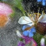frusen blomma — Stockfoto