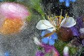 Frozen flower — Stock Photo