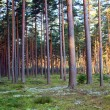 Stock Photo: Forest on a lovely day