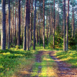 Forest earth road on a lovely day — Stok fotoğraf