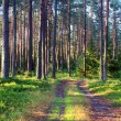 Forest earth road on a lovely day - Stock Photo
