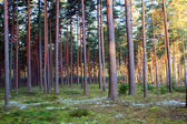 Forest on a lovely day — Stock Photo