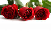 Close-up shot of a red roses — Stock Photo