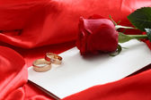 Red rose and blank card — Stock Photo