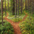 Crossroads in the forest - Stock Photo