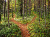 Crossroads in the forest — Foto Stock