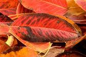 Autumn leaves 2 — Stock Photo