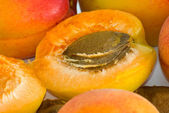 Apricot nucleus — Stock Photo