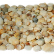 Stock Photo: Shells background