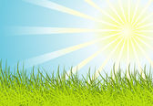 Sun and grass background — Vector de stock