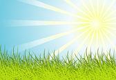 Zon en gras achtergrond — Stockvector