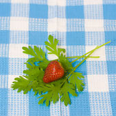 Strawberry and plant on fabric background — Stok fotoğraf