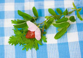 Strawberry and flower on fabric background — Stock fotografie