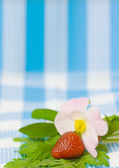 Strawberry and flower on fabric background — 图库照片