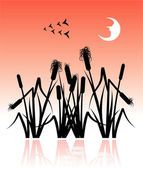 The reeds — Stock Vector
