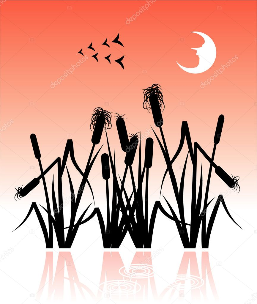 Illustration with the reeds, saved as eps8. — Stock Vector #1467689