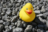 Rubber Duck at Dry Bottom — Stock Photo