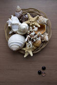 Conchas de mar — Foto de Stock