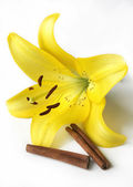 Yellow Lily and Two Cinnamon Sticks — Stock Photo