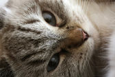 Portrait of Attentive Cat — Stock Photo