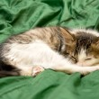 Sleeping on the Green Silk Cloth Kitten — Stock Photo