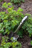 Garden Trowel and Green Parsley — Stock Photo