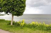 Single Tree on the Seashore — Stock Photo
