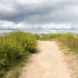 Stock Photo: Sand Road and Thick Grass