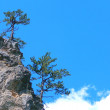 Rock with trees on a background sky - Stock Photo