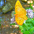 Stock Photo: A butterfly sits on a flower