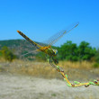 A dragon-fly sits on a branch — Foto Stock