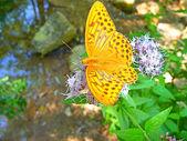 Bir kelebek bir çiçek üzerinde oturur — Stok fotoğraf