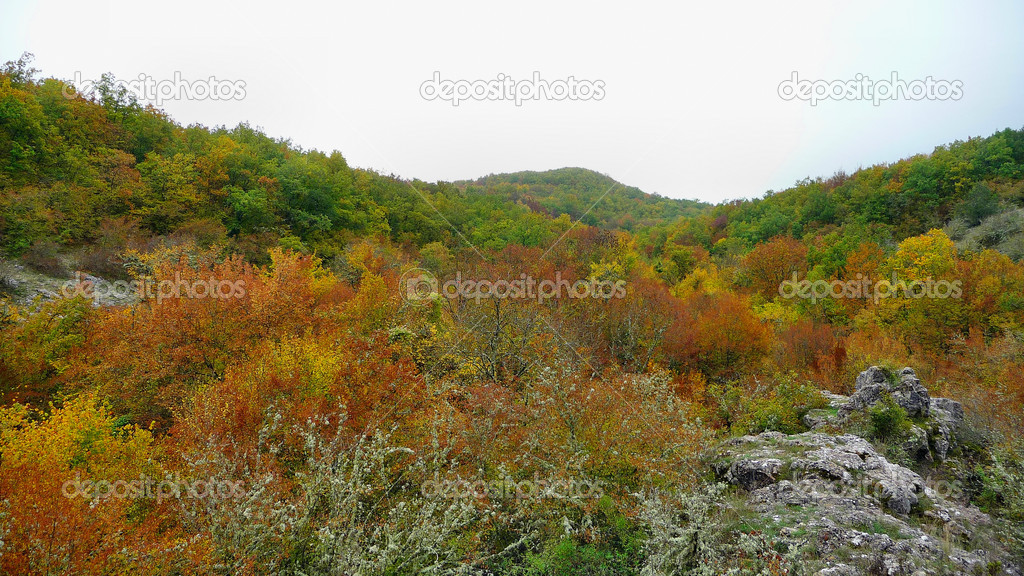 Autumn wood in CrimeaAutumn wood in Crimea — Stock Photo #1480482