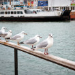 Marine gulls — Stock Photo #2221991